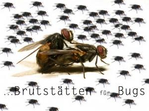 Brutstätten für Bugs